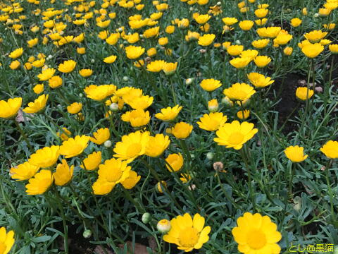 花とねこ像