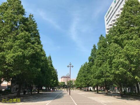 大通り公園を散歩