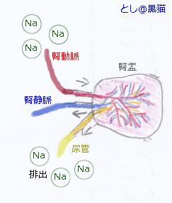 ナトリウムの排出