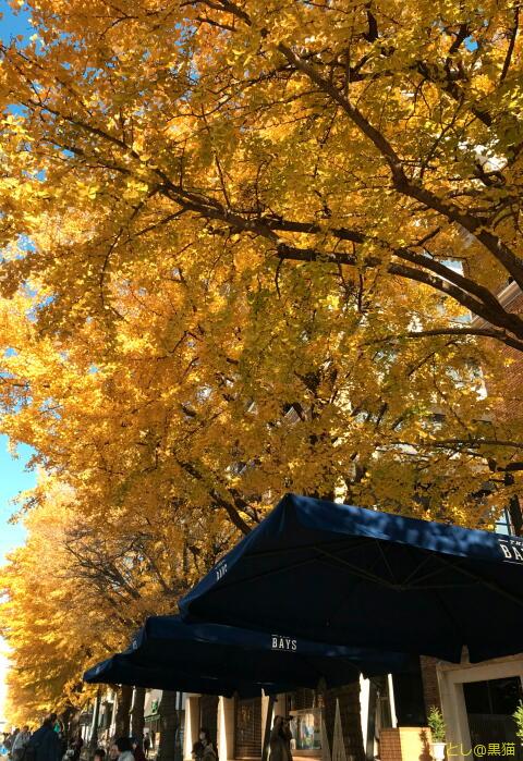 日本大通り から 横浜公園