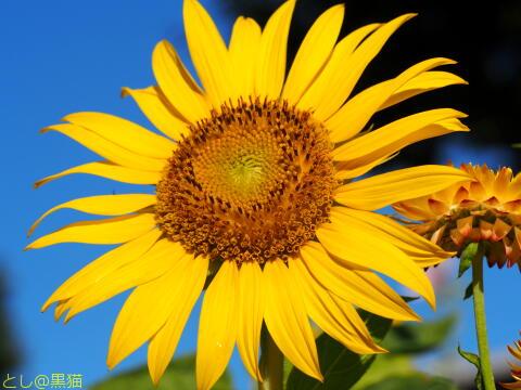 夏の花 と 夕陽